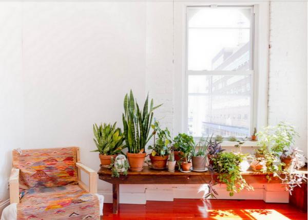 8 điều thiết yếu cần phải biết khi trồng cây xanh trong nhà
